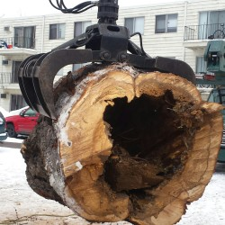 Stump Grinding St. Paul MN