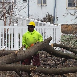Minnesota Tree Removal Services