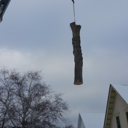 Minneapolis Tree Removal