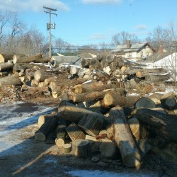 MN Tree Removal Company Minneapolis