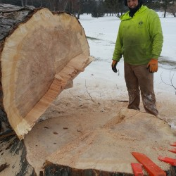 St. Louis Park Tree Removal