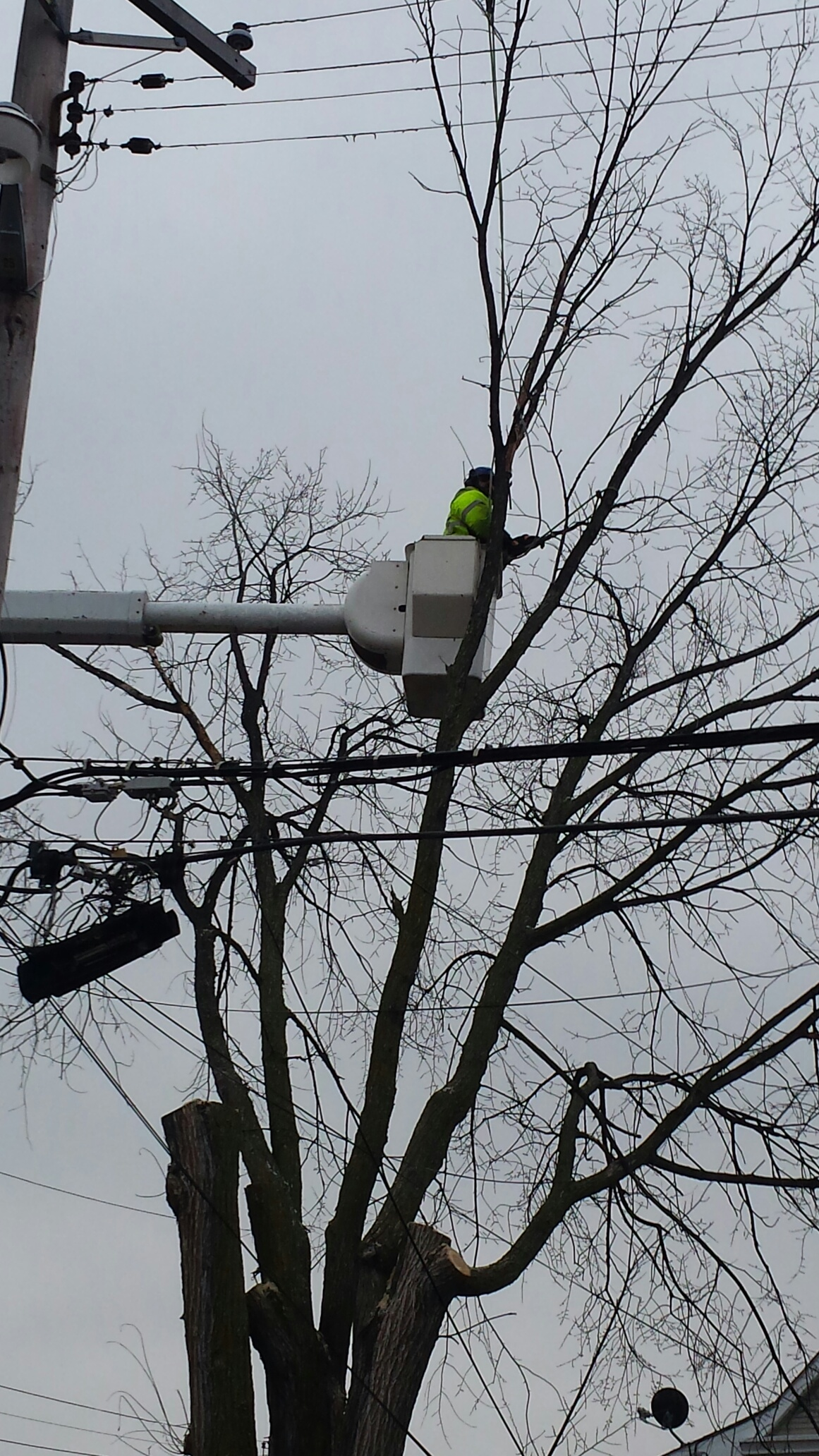 Tree Trimming Minneapolis Tree Trimming Amp Care Service