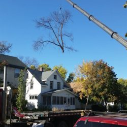 Tree Service Near Me In Minnesota