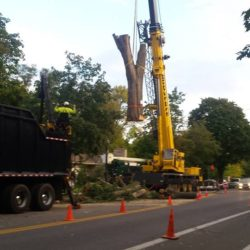 Tree Removal Mounds View Minnesota