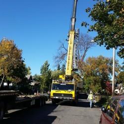 Tree Removal Mounds View