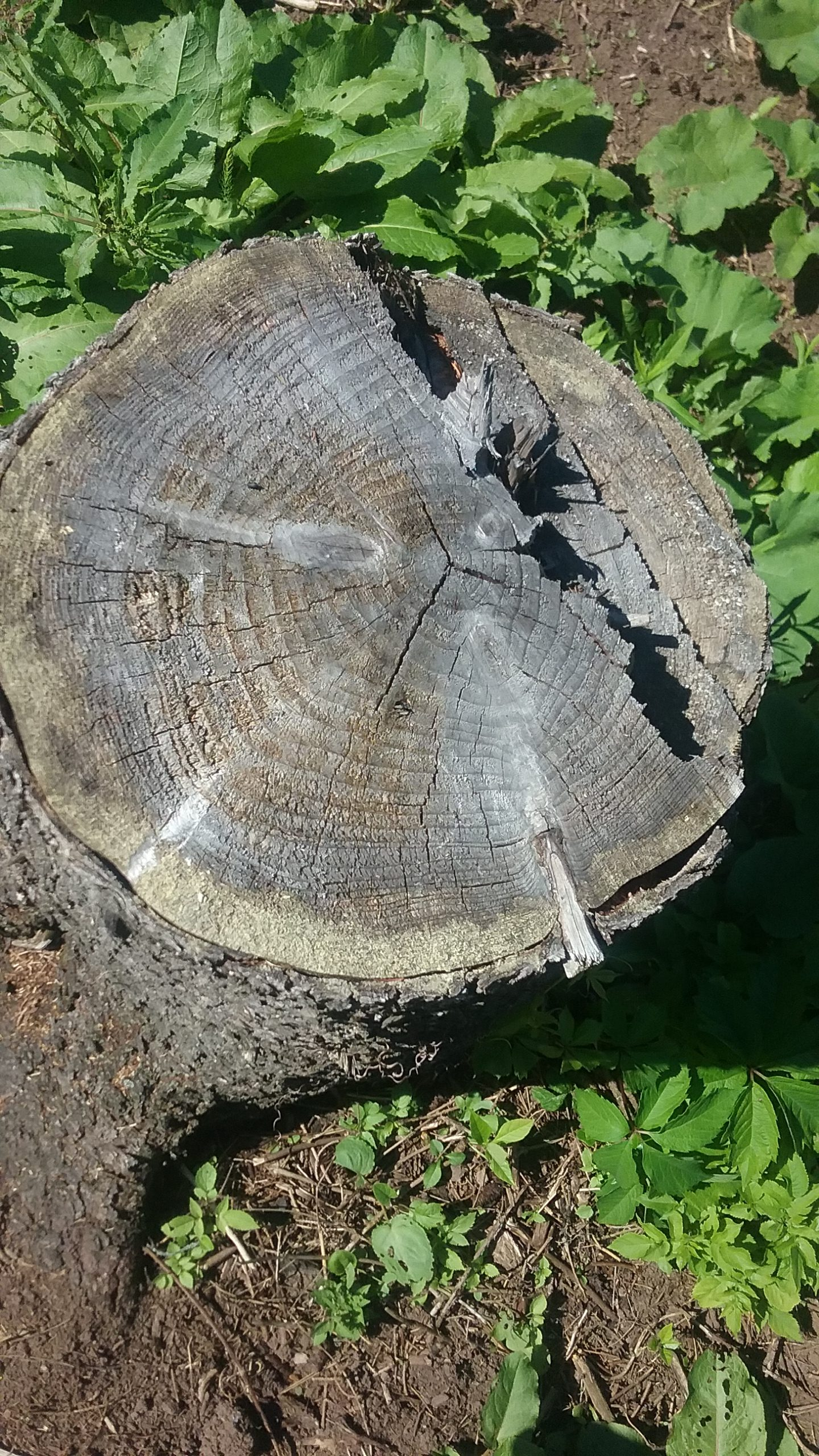 Mounds View MN Tree Stump Removal Company