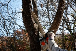 White Bear Lake Tree Care Company Minnesota