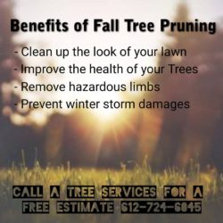 Tree Trimming & Pruning MN