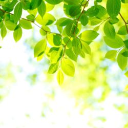 5 Tips for Caring for Your Trees