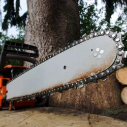 Mounds View Tree Contractor | Tree Removal, Stump Grinding & Trimming