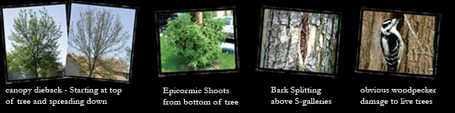 Signs of Tree Damages | MN Arborists