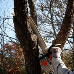 Tree Removal, Stump Grinding & Trimming in the Twin Cities
